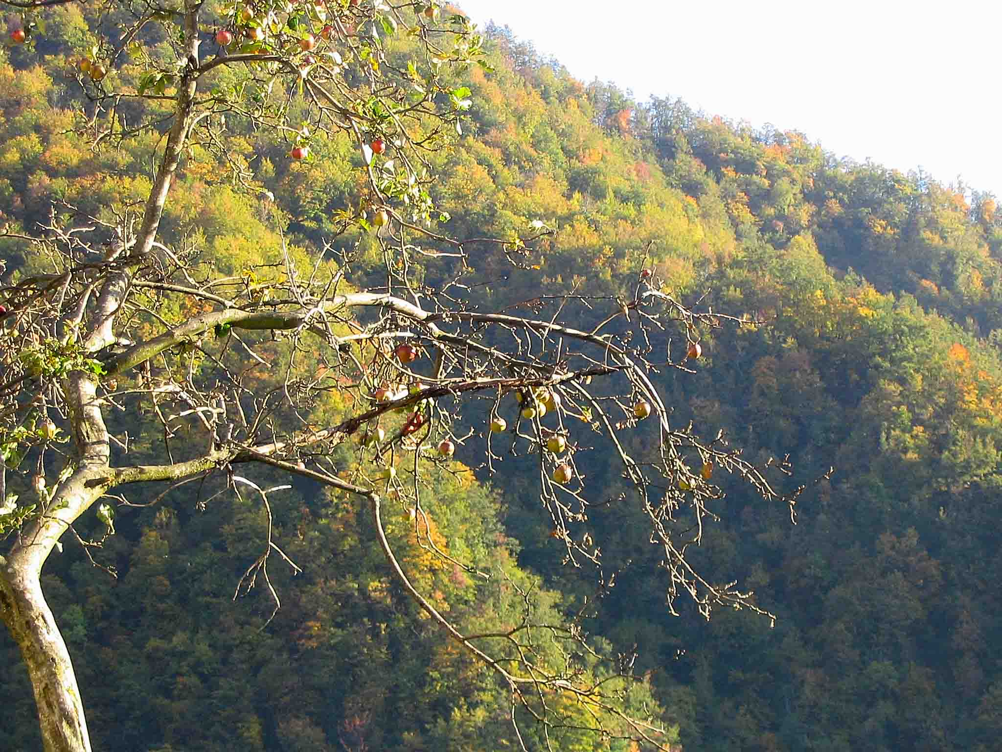 boschi-gialli