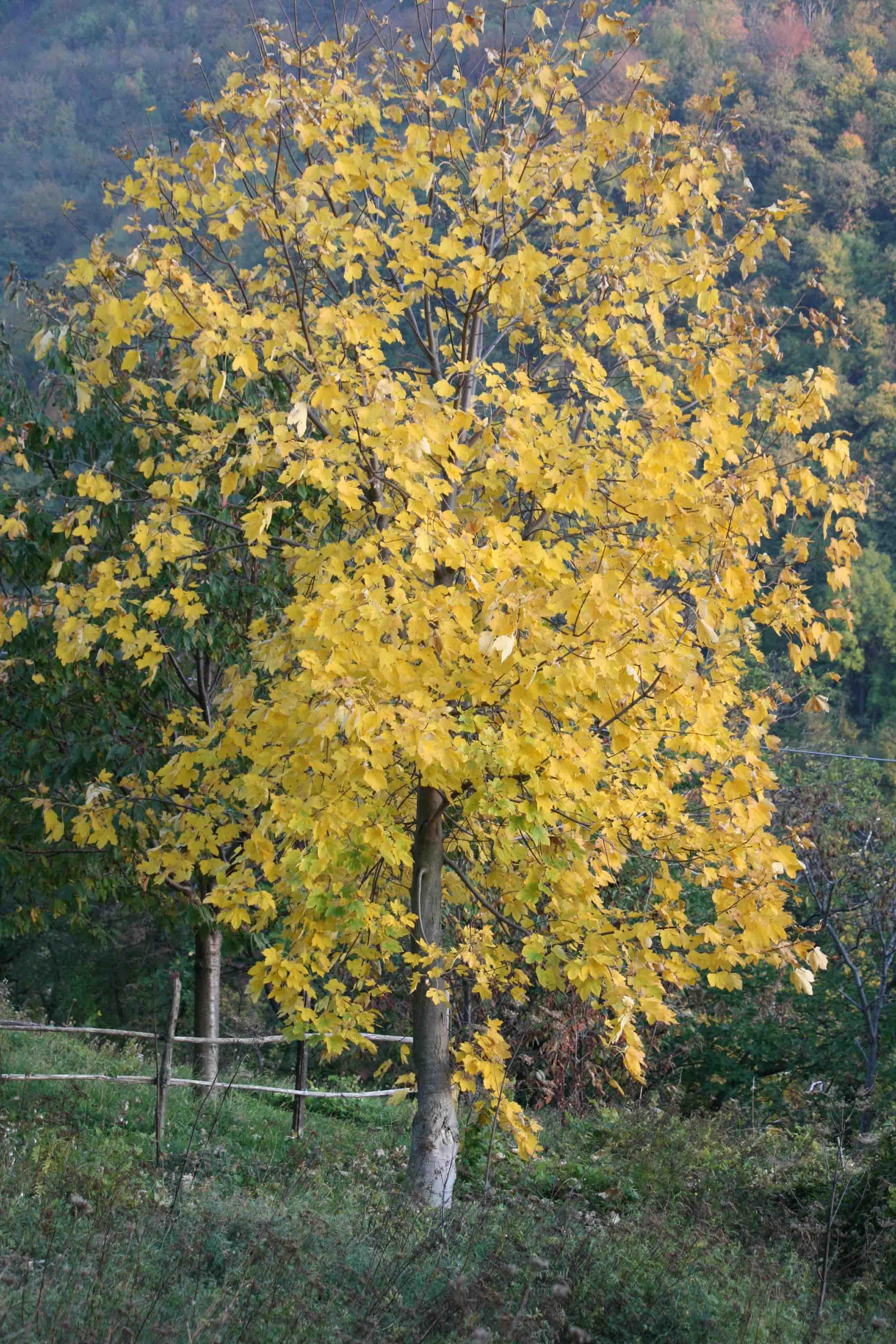 d-autunno
