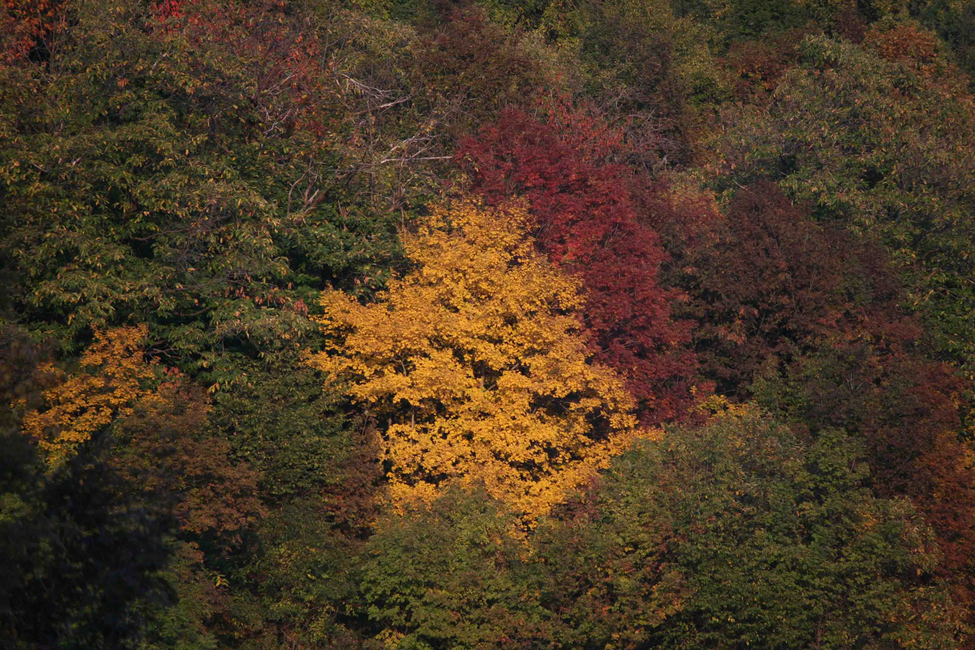 colori-di-bosco